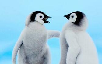 cute penguin wallpapers