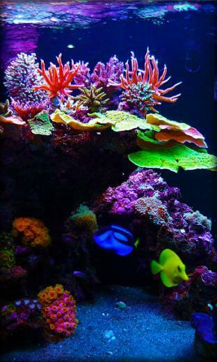 Download Aquarium Live Wallpaper for your Android phone
