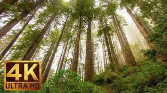 Redwood National and State Parks Photography in 4K ProArtInc