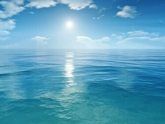 Sea Wallpaper   funny pictures funny images