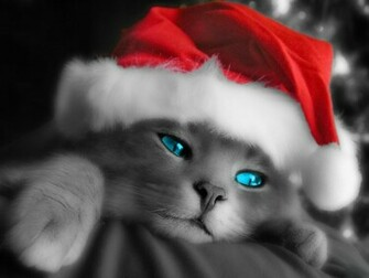 Cute Christmas Kitten Wallpapers Christian Wallpapers