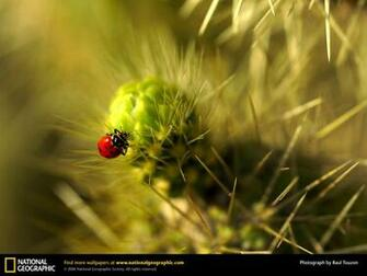 Wallpaper Wallpapers Download Animals   National Geographic