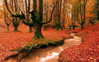 Source URL httpwwwlatorocom19192 desktop wallpapers autumnhtm