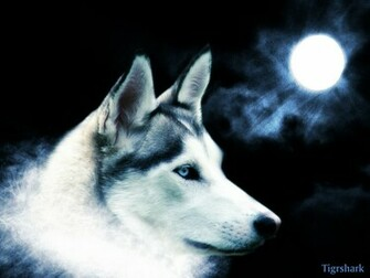 1287650821 1024x768 artistic grey wolf wallpaperjpg