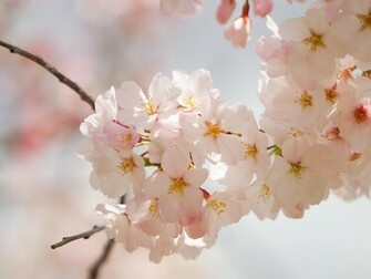 Amazing Spring Flowers Wallpapers 521 Entertainment World