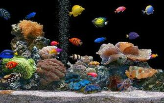 Aquarium Colorful Screensavers wallpapers HD   138274