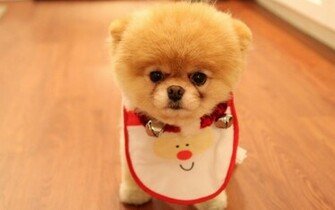 Cute Dog Christmas Wallpapers HD Wallpapers