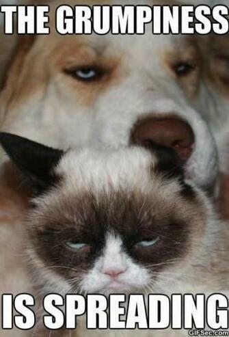 Grumpy cat and grumpy dog 1jpg