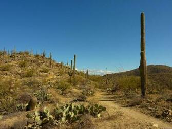 MLeWallpaperscom   Saguaros Carillo Trail
