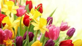 Spring Flowers HD Wallpapers