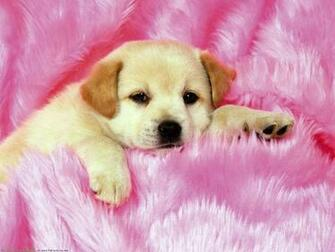 The Little cute Dogs Puppies desktop wallpaper pictures for PC