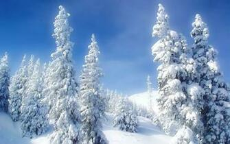 Landscapes Nature Winter Snow Trees Blue Skies High