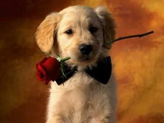 Cute Puppy Wallpaper Cute Puppy Wallpapers Cute Puppy Wallpaper