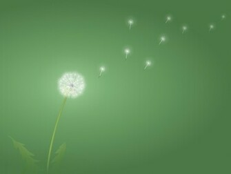 1600x1200 Dandelion desktop PC and Mac wallpaper