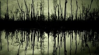 wallpapers wallpaper swamp trees winter background images