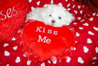 Valentines Kittens Puppies and Cupcakes   Cute Pictures and GIFs