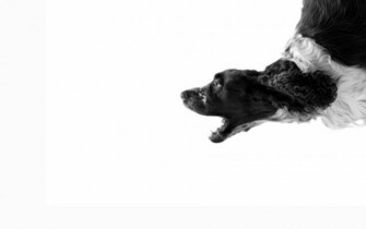 black and white dog with white background HD Wallpapers 1920 x 1200
