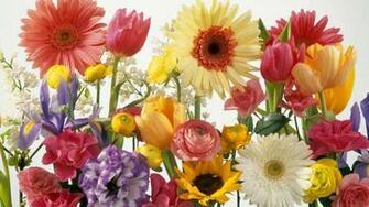 Flower Spring Wallpaper spring wallpapers hd