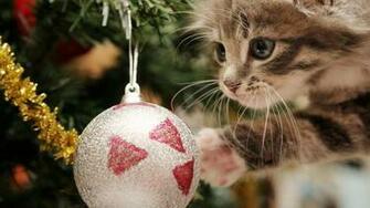 Super Cute Christmas Cat Full HD wallpaper Christmas Ball 1080p