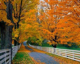 autumn leaves falling wallpaper   Wallpapers