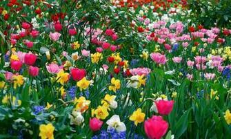 Spring Flower Wallpaper Backgrounds