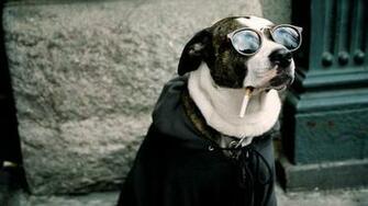 Dog Funny HD Wallpapers Download Desktop Wallpaper Images