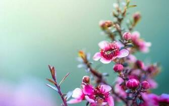 Spring Flowers Wallpaper Related Keywords amp Suggestions