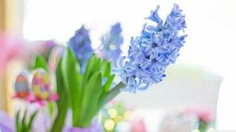 Easter 2020 Blue Hyacinth Flower Spring Ultra HD Desktop
