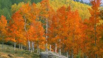 download backgrounds colorado creek background aspens desktop