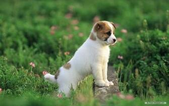 Wallpaper Animal wallpaper Lovely Dog Baby 5