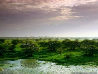Keoladeo National Park Photo India Wallpaper   National Geographic