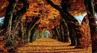 free fall backgrounds autumn trees wallpaper best free wallpaper