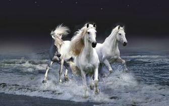 wallpaper National Geographic Animal Wallpaper Download