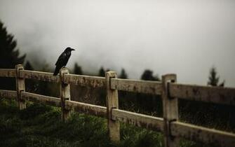 raven bird fence 2015 09 23 8 total views 8 1 views for 7 days 1 raven