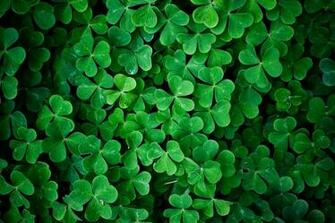 1684 Category Color Hd Wallpapers Subcategory Green Hd Wallpapers