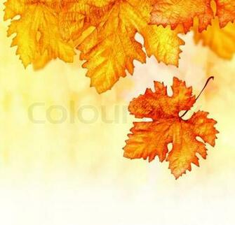 Wallpaper Borders on Orange Autumnal Backdrop Dry Leaves Border Old
