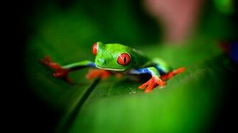 Cute Green Frog 2048 x 1152 Download Close