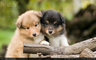 Cute Pups Cute Pups wallpaper