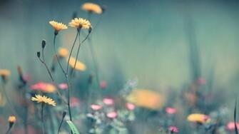 More Beautiful Beautiful Spring Flowers Wallpaper FLgrx Graphics