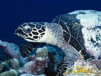 Best Wallpapers Sea Turtle Wallpapers