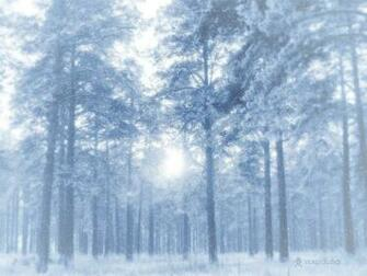 1600x1200 Winter forest desktop PC and Mac wallpaper