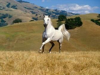 pictures top 10 horse wallpaper horse wallpaper