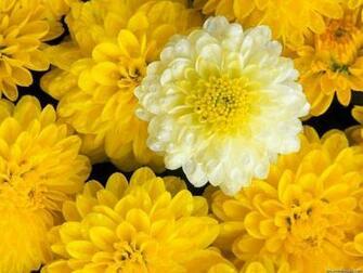 flowers for flower lovers Flowers desktop wallpapers