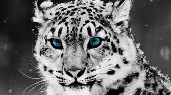 75 HD Animals Backgrounds
