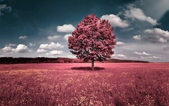 Pink Nature Wallpapers   1920x1200   2082748