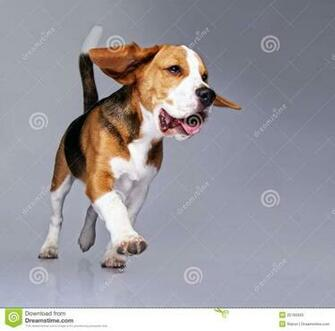 BROWSE funny beagle pictures with captions  HD Photo Wallpaper