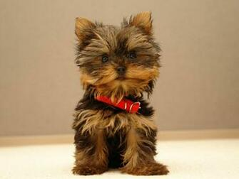 Online Wallpapers Shop Cute Puppy Pictures Puppy