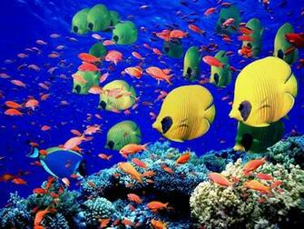 saltwater tropical fish wallpapaer   Live tropical fish