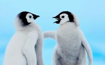 Cute Penguin Backgrounds