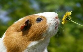 Hamster Desktop Animal Animals wallpaper